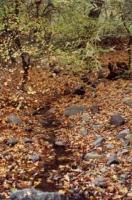 Képek a Morgó-patakról - 2000. április