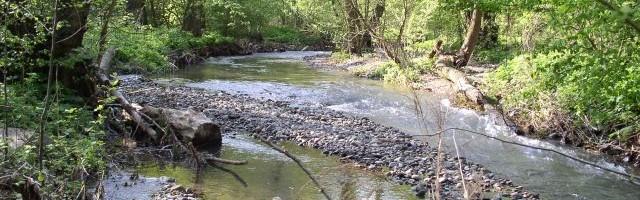 A Mátyásfa Környezetvédő Egyesület állásfoglalása a Morgó-patak kotrásáról