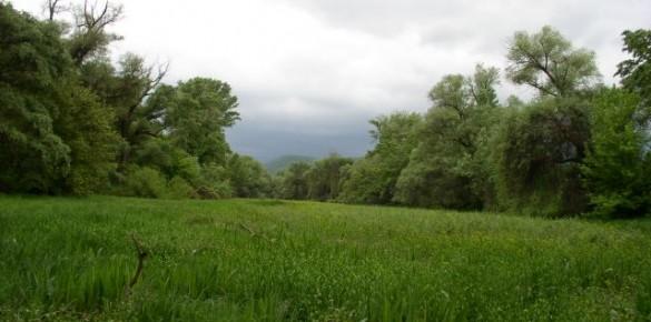 A Kismarosi-sziget és a Kis-Duna-holtág